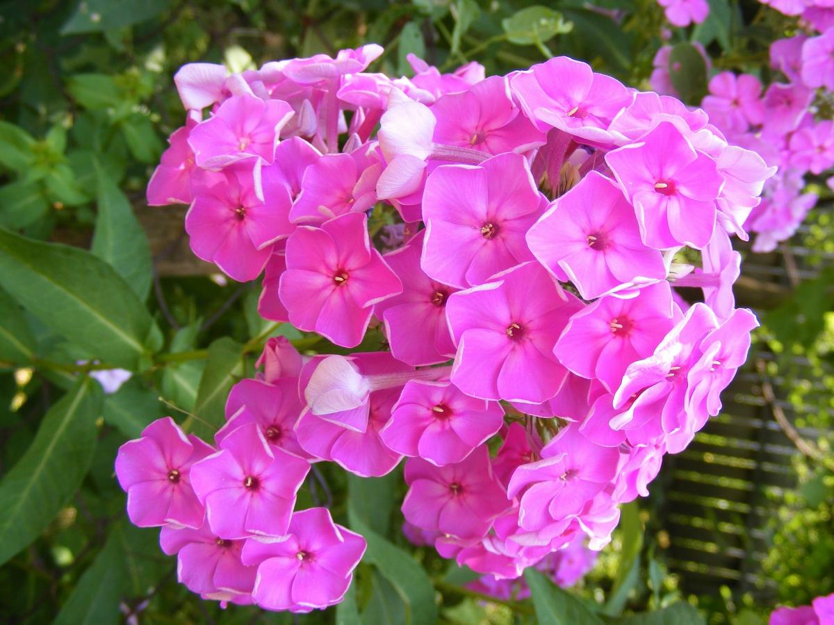 Цветы многолетники основные правила посадки и рекомендации